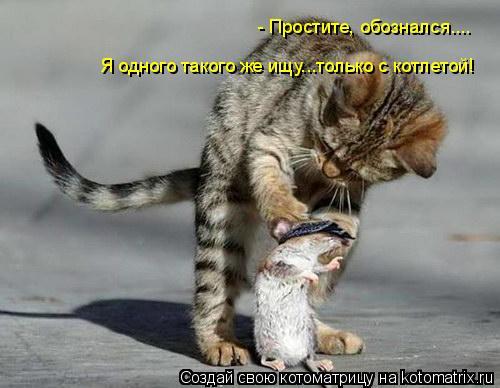 Котоматрица: - Простите, обознался.... Я одного такого же ищу...только с котлетой!