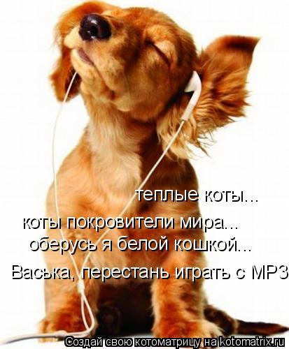 Котоматрица: теплые коты... коты покровители мира... оберусь я белой кошкой... Васька, перестань играть с MP3