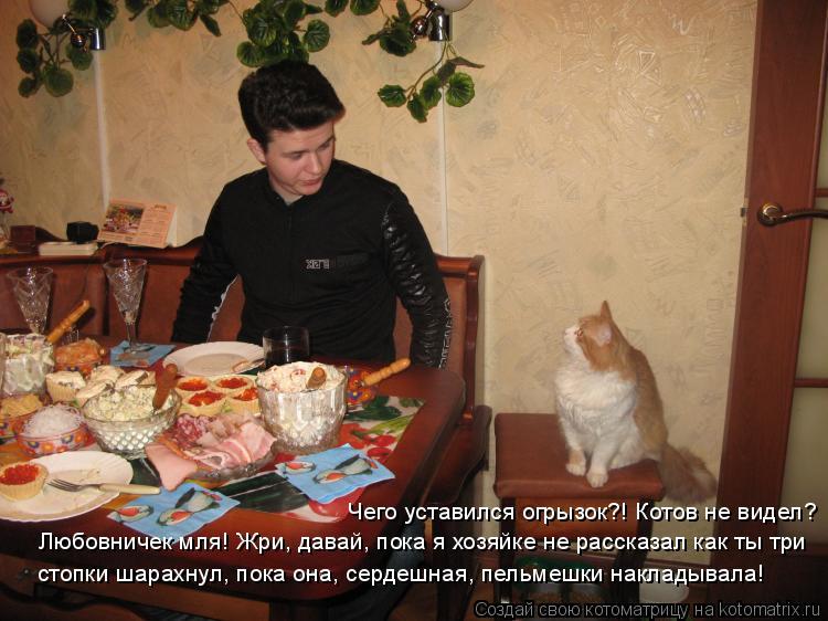 Котоматрица: Чего уставился огрызок?! Котов не видел? Любовничек мля! Жри, давай, пока я хозяйке не рассказал как ты три стопки шарахнул, пока она, сердешн