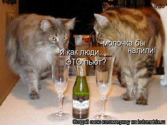 Котоматрица: -и как люди ЭТО пьют? -молочка бы налили!