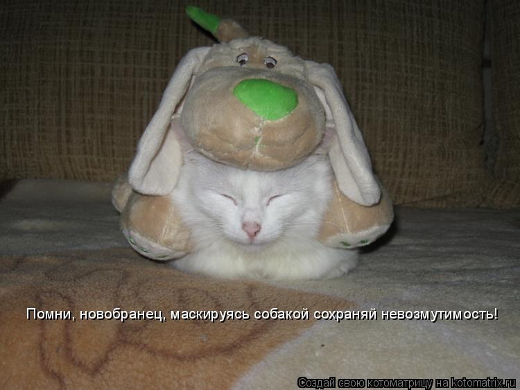 Котоматрица: Он зн Помни, новобранец, маскируясь собакой сохраняй невозмутимость!