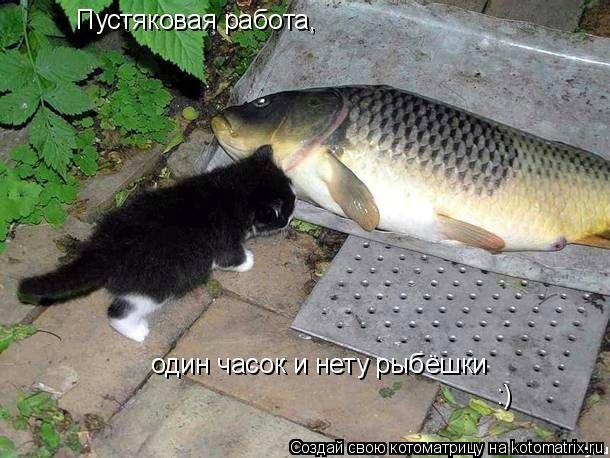 Котоматрица: Пустяковая работа, один часок и нету рыбёшки :)