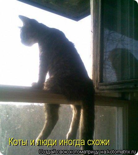 Котоматрица: Коты и люди иногда схожи