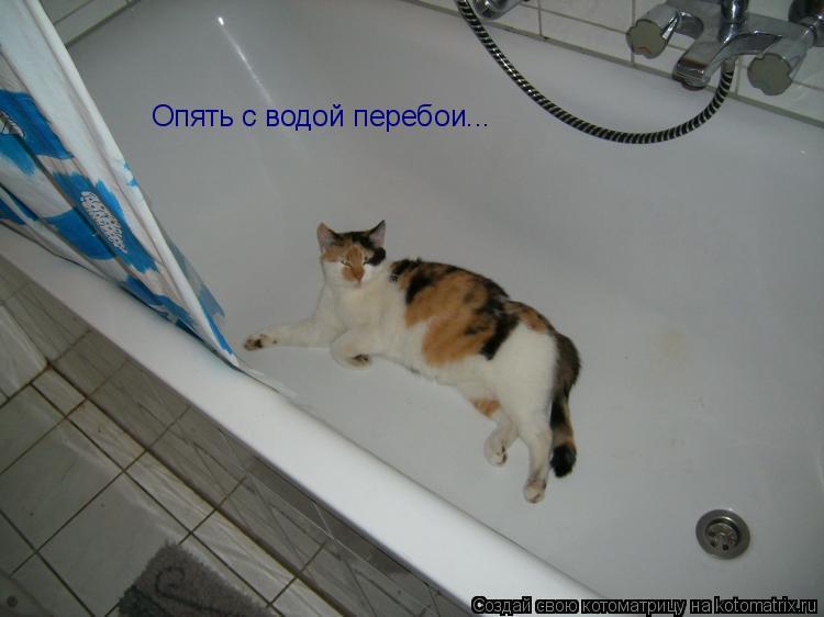 Котоматрица: Опять с водой перебои...