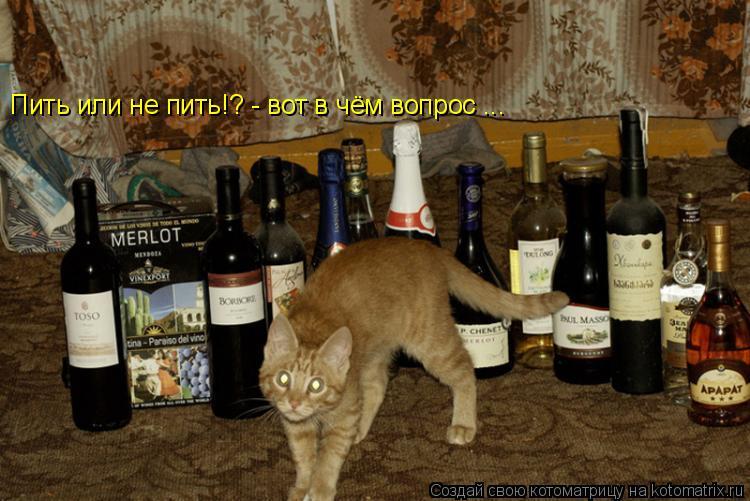 Котоматрица: Пить или не пить!? - вот в чём вопрос ...