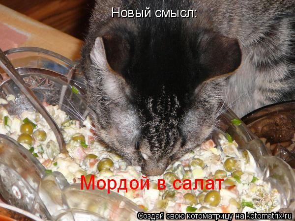 Котоматрица: Новый смысл: Мордой в салат