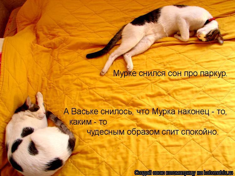 Котоматрица: Мурке снился сон про паркур. А Ваське снилось, что Мурка наконец - то, каким - то  чудесным образом спит спокойно.
