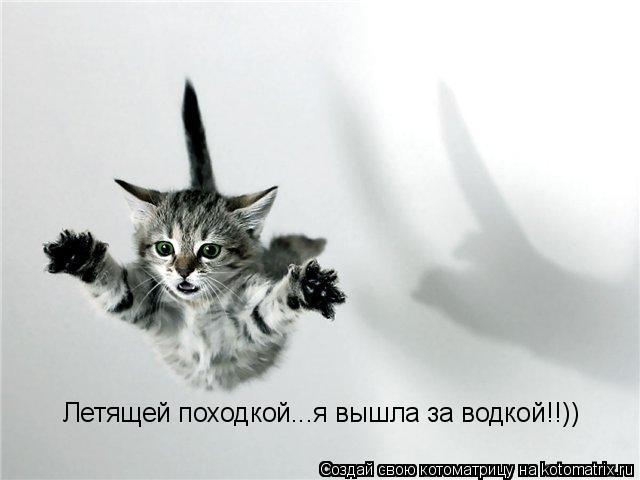 Котоматрица: Летящей походкой...я вышла за водкой!!))