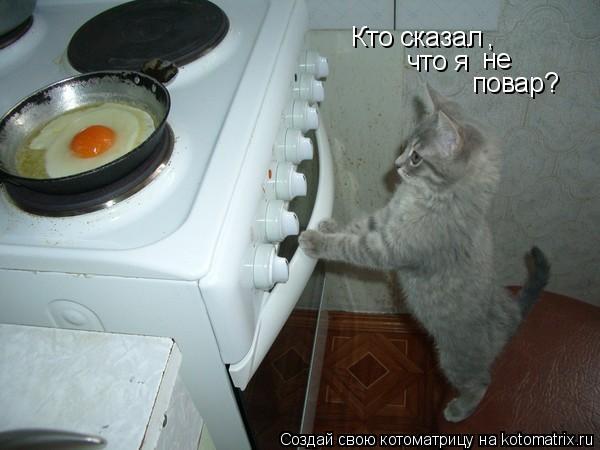 Котоматрица: Кто сказал , что я не повар?