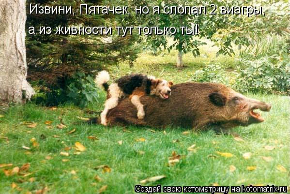 Котоматрица: Извини, Пятачек, но я слопал 2 виагры,  а из живности тут только ты!