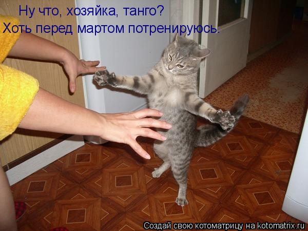 Котоматрица: Ну что, хозяйка, танго? Хоть перед мартом потренируюсь.