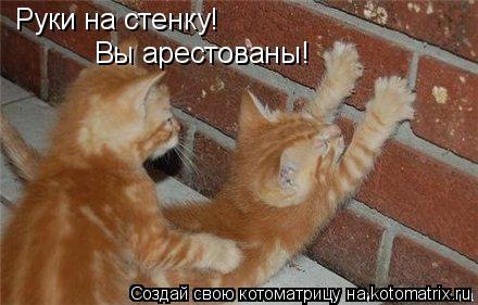 Котоматрица: Руки на стенку! Вы арестованы!