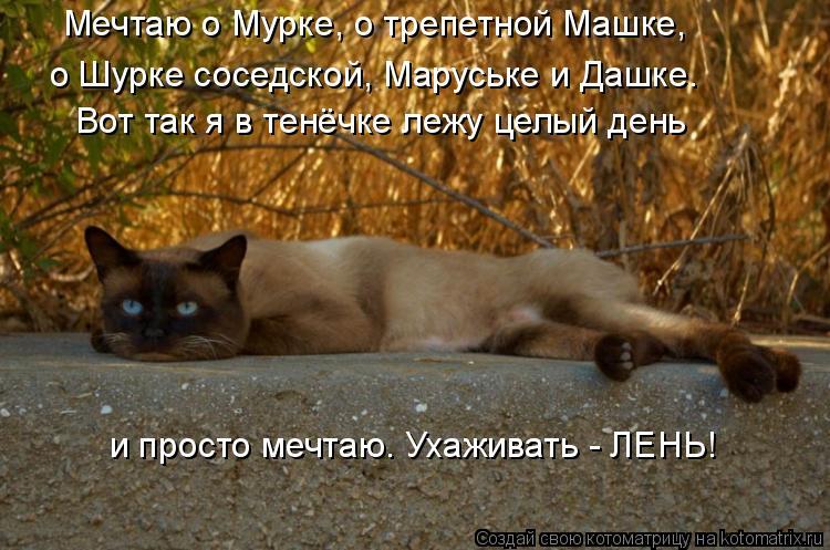 Котоматрица: Мечтаю о Мурке, о трепетной Машке, о Шурке соседской, Маруське и Дашке. Вот так я в тенёчке лежу целый день и просто мечтаю. Ухаживать - ЛЕНЬ!