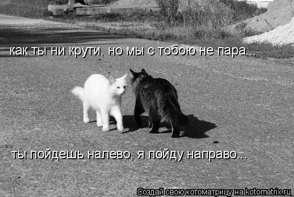 Котоматрица: как ты ни крути, но мы с тобою не пара... ты пойдешь налево, я пойду направо...