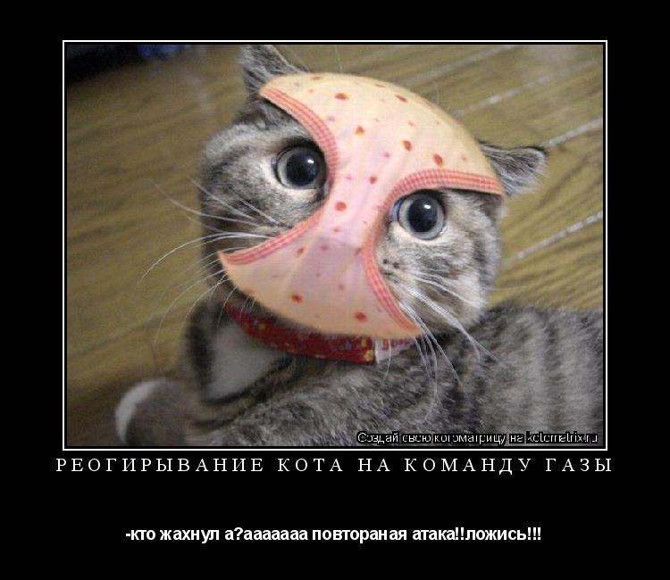 Котоматрица: реогирывание кота на команду газы -кто жахнул а?ааааааа повтораная атака!!ложись!!!