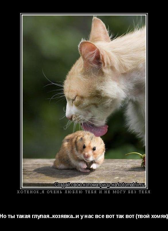 Котоматрица: Котенок,я очень люблю тебя и не могу без тебя Но ты такая глупая..козявка..и у нас все вот так вот (твой хомяк)