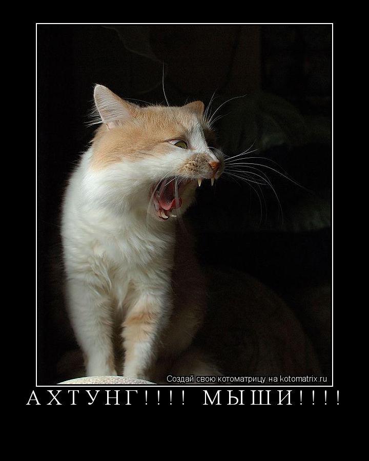 Котоматрица: АХТУНГ!!!! МЫШИ!!!!