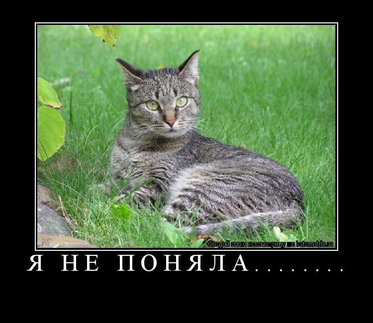 Котоматрица: Я НЕ ПОНЯЛА........
