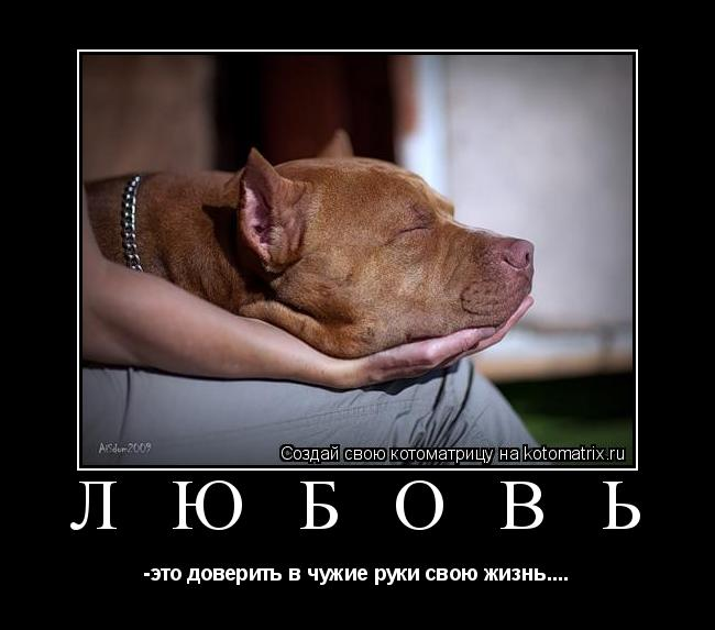 Котоматрица: Л Ю Б О В Ь -это доверить в чужие руки свою жизнь....