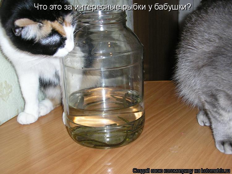 Котоматрица: Что это за интересные рыбки у бабушки?
