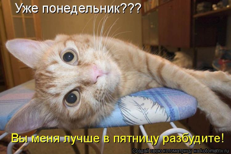 Котоматрица: Уже понедельник??? Вы меня лучше в пятницу разбудите!