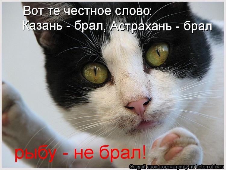 Котоматрица: Вот те честное слово : Казань - брал , Астрахань - брал рыбу - не брал!