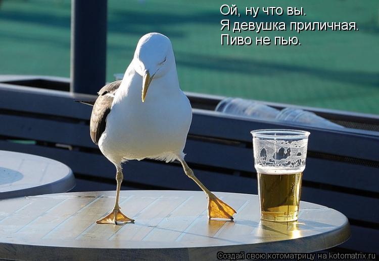 Котоматрица: Ой, ну что вы… Я девушка приличная.  Пиво не пью.