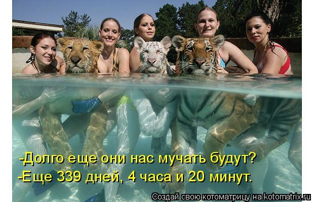 Котоматрица: -Долго еще они нас мучать будут? -Еще 339 дней, 4 часа и 20 минут.
