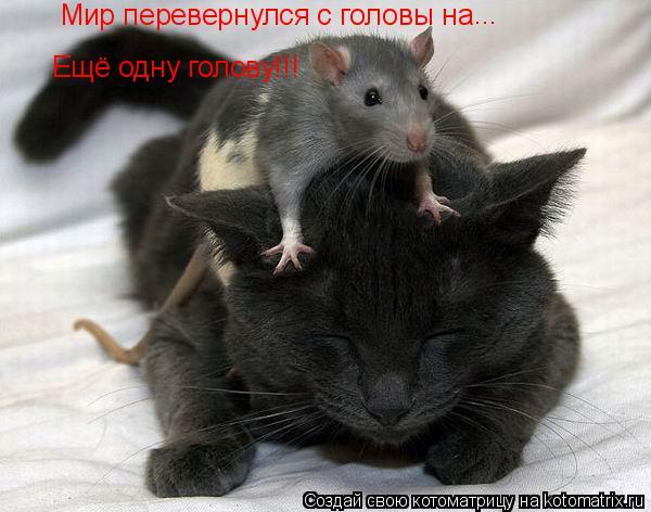 Котоматрица: Мир перевернулся с головы на  Ещё одну голову!!! ...
