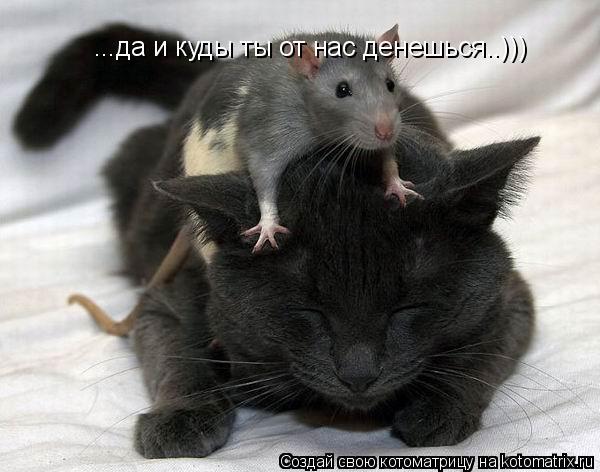 Котоматрица: ...да и куды ты от нас денешься..)))