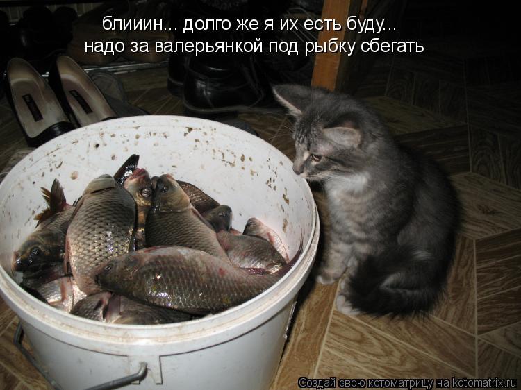 Котоматрица: блииин... долго же я их есть буду... надо за валерьянкой под рыбку сбегать
