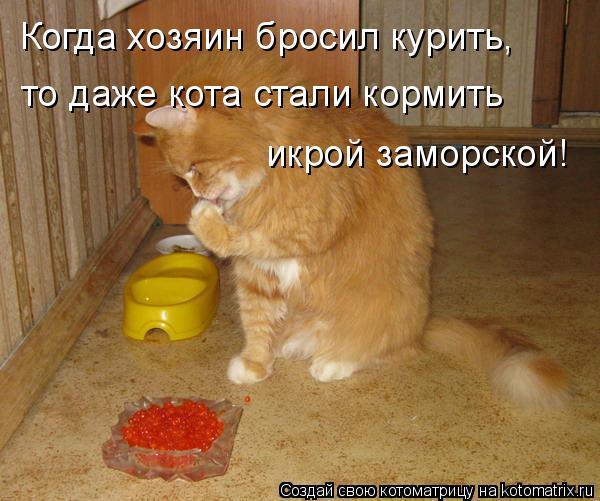 Котоматрица: Когда хозяин бросил курить, то даже кота стали кормить икрой заморской!