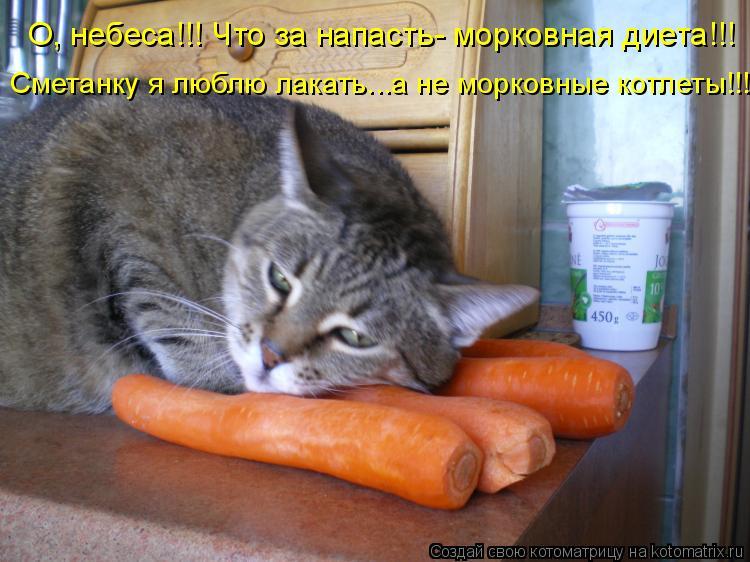 Котоматрица: О, небеса!!! Что за напасть- морковная диета!!! Сметанку я люблю лакать...а не морковные котлеты!!!