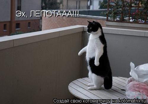 Котоматрица: Эх, ЛЕПОТААА!!!