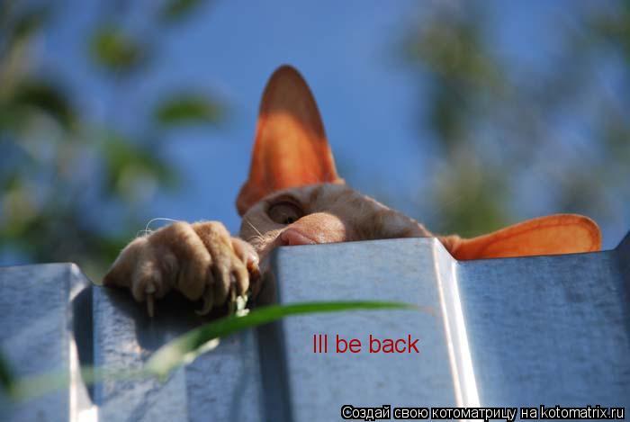 Котоматрица: Ill be back