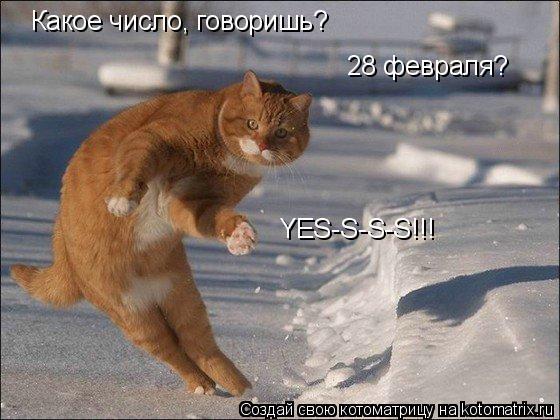 Котоматрица: Какое число, говоришь? 28 февраля? YES-S-S-S!!!