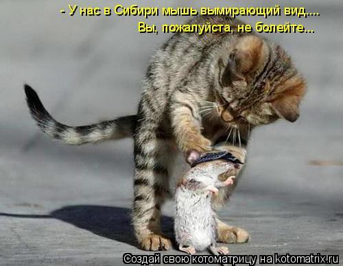 Котоматрица: - У нас в Сибири мышь вымирающий вид.... Вы, пожалуйста, не болейте...