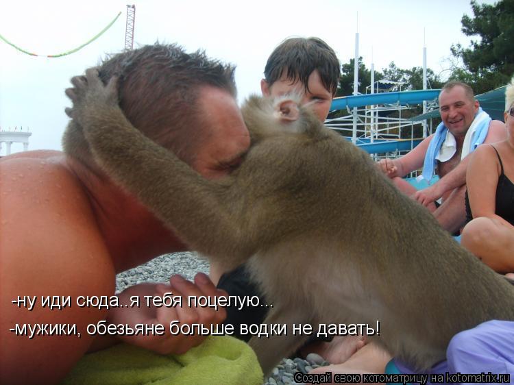 Котоматрица: -ну иди сюда..я тебя поцелую... -мужики, обезьяне больше водки не давать!