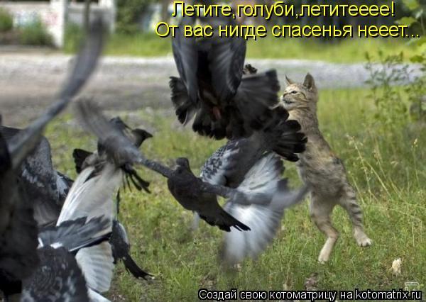 Котоматрица: Летите,голуби,летитееее! От вас нигде спасенья нееет...