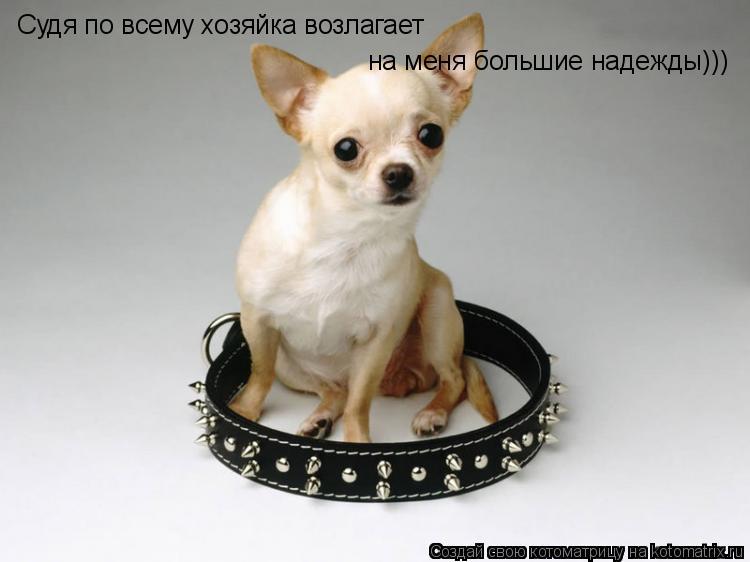 Котоматрица: Судя по всему хозяйка возлагает на меня большие надежды)))
