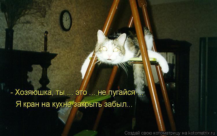 Котоматрица: Я кран на кухне закрыть забыл... - Хозяюшка, ты ... это ... не пугайся ...