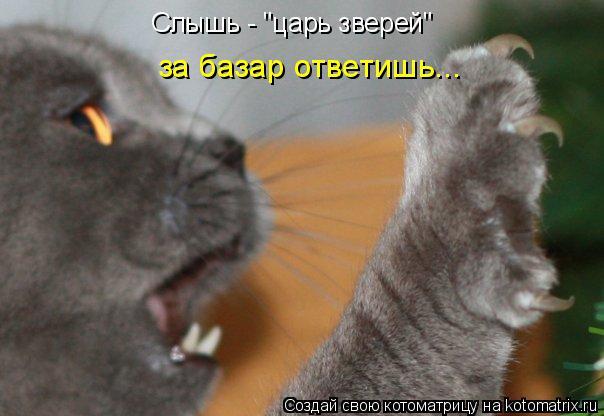"""Котоматрица: Слышь - """"царь зверей"""" за базар ответишь..."""