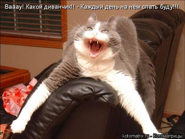 Котоматрица: Вааау! Какой диванчик!! - Каждый день на нём спать буду!!!