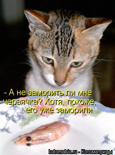 Котоматрица: - А не заморить ли мне червячка? Хотя, похоже, его уже заморили...