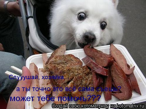 Котоматрица: Слууушай, хозяйка... может тебе помочь??? а ты точно это всё сама съешь?