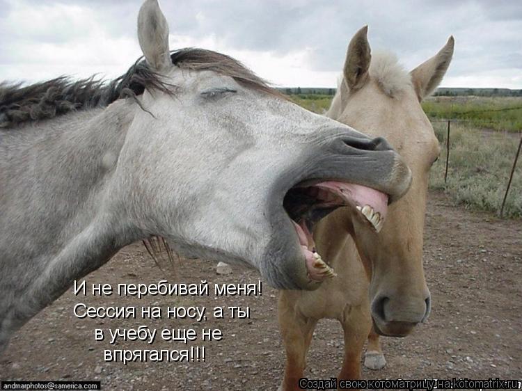 Котоматрица: И не перебивай меня! Сессия на носу, а ты в учебу еще не впрягался!!!