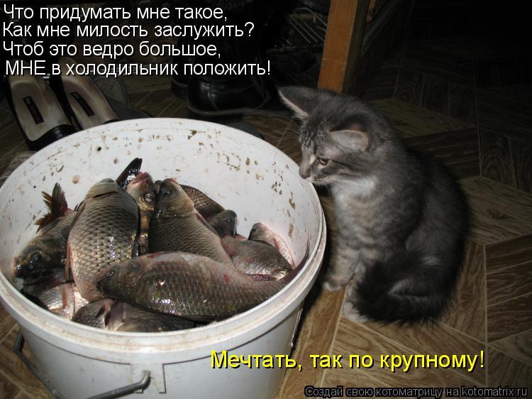 Котоматрица: Что придумать мне такое, Как мне милость заслужить? Чтоб это ведро большое, МНЕ в холодильник положить! Мечтать, так по крупному!