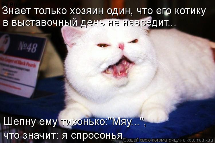 """Котоматрица: Знает только хозяин один, что его котику в выставочный день не навредит... Шепну ему тихонько:""""Мяу..."""",  что значит: я спросонья."""