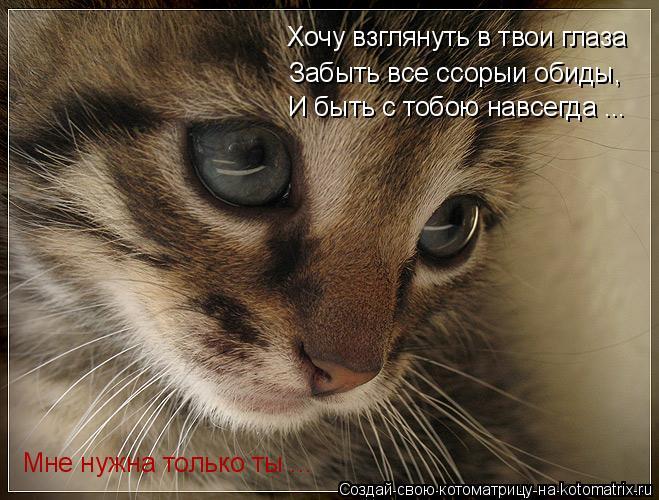 Котоматрица: Хочу взглянуть в твои глаза Забыть все ссорыи обиды,  И быть с тобою навсегда ... Мне нужна только ты ...