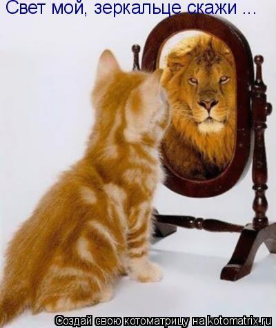 Котоматрица: Свет мой, зеркальце скажи ...